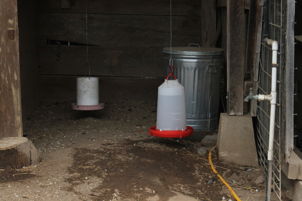 A feeder and waterer (warmed by an electric heater) hangs suspended from the shed rafters.