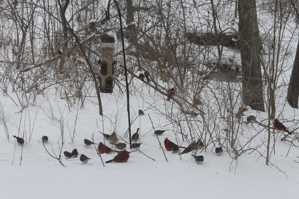 A flock of birds gathers at one of our feeders.