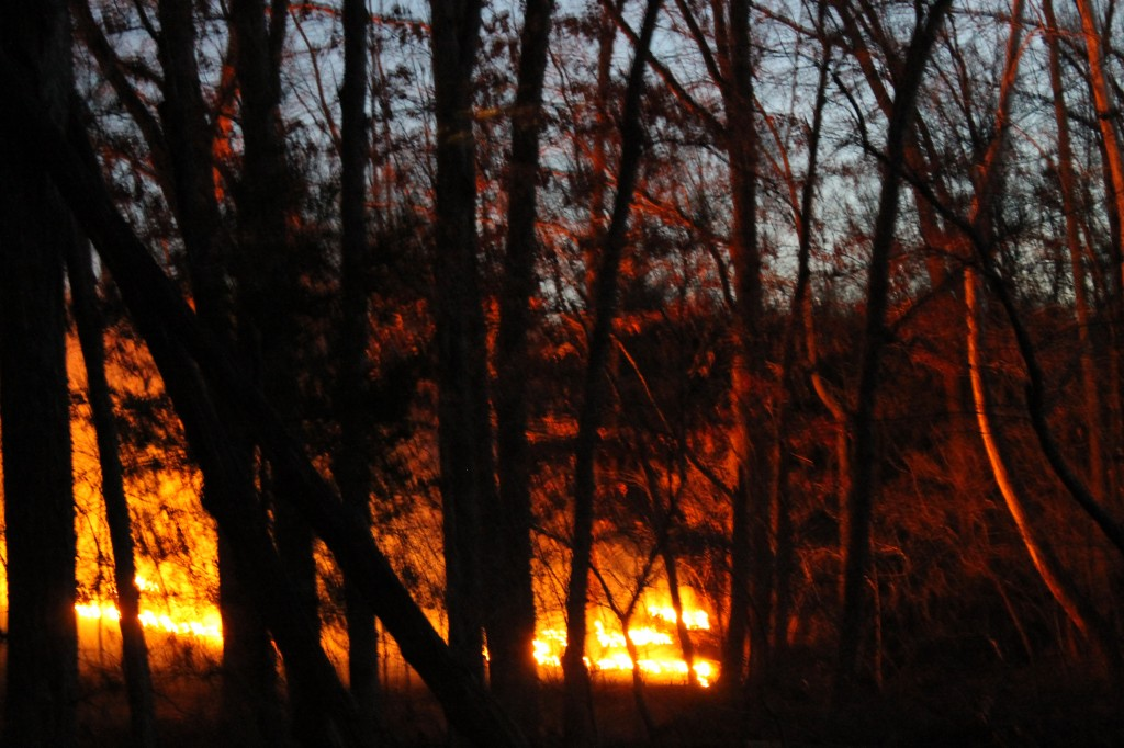 A prescribed fire burns itself out at dusk