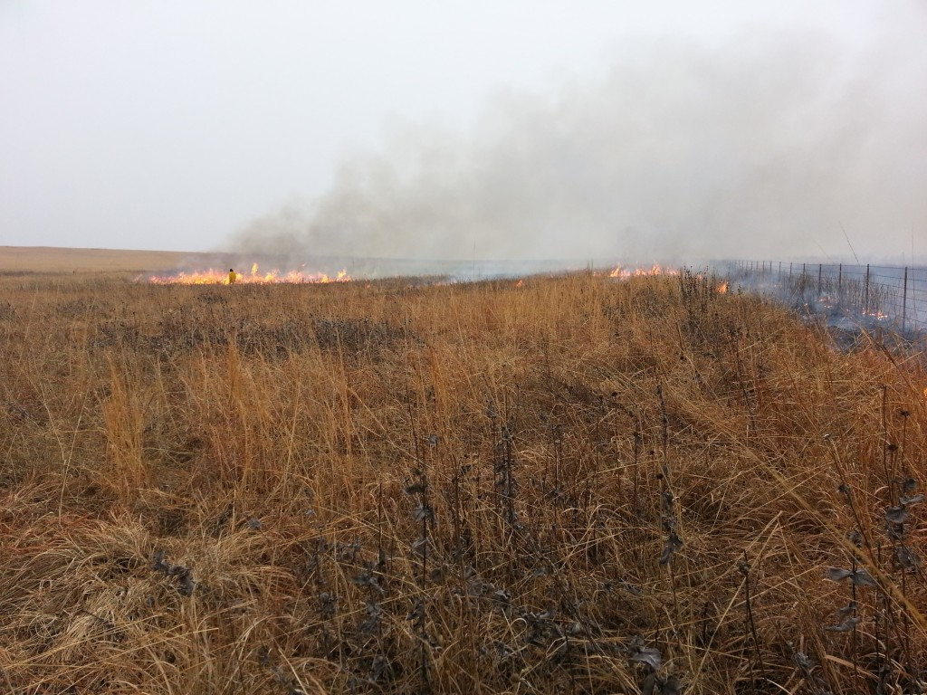 Controlled burn on MPF's Coyne Prairie, Dade Co MO