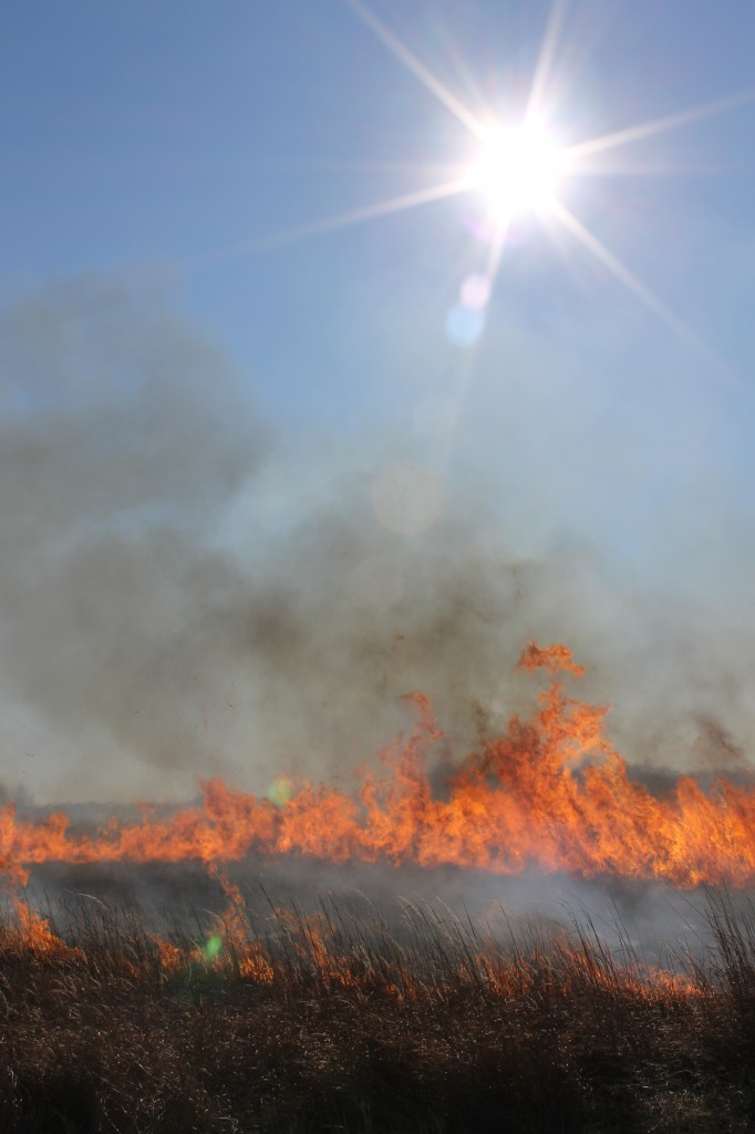 Controlled burn on a sunny day