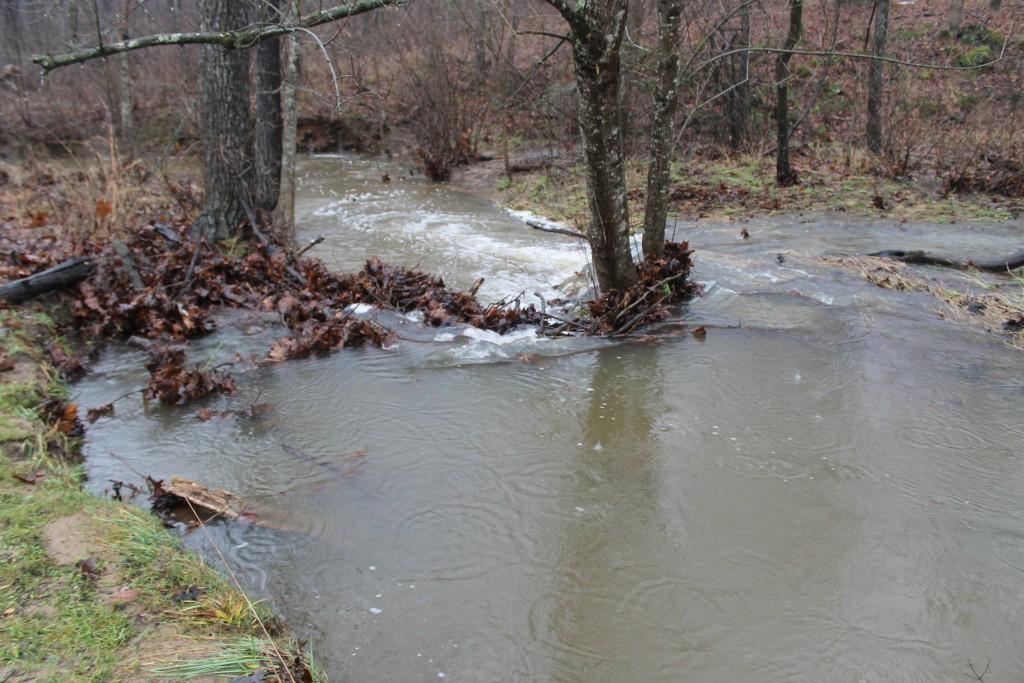 Pearl Creek just below the pond.