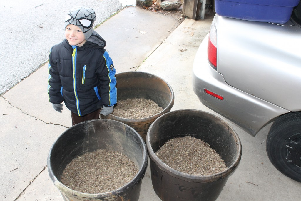 Julian and buckets full of native seeds
