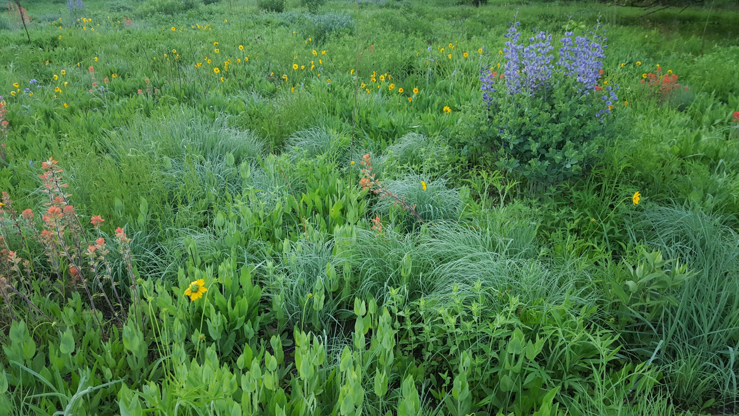 Spring Native Plant Landscape